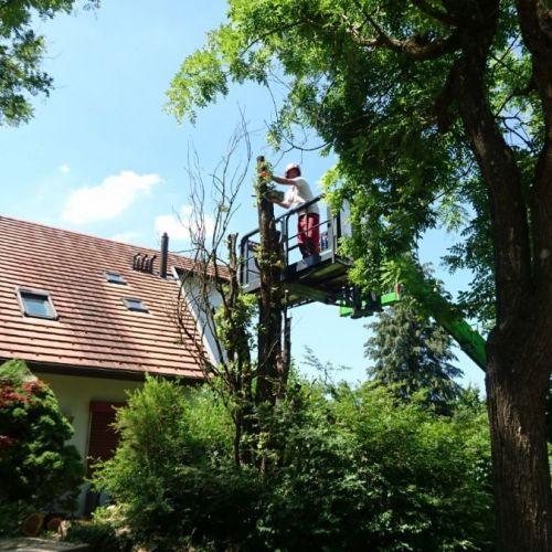 trueb-gartenholzerei-ag-gartenholzerei-region-zuerich_3.jpg